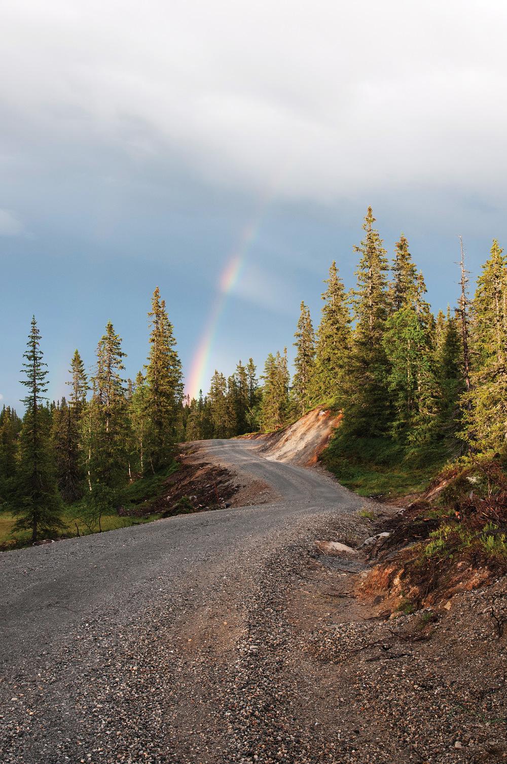 Gode skogsbilveger er viktig for en effektiv transport av tømmer fra skog til industri. Foto: Jostein Frydenlund, NIBIO