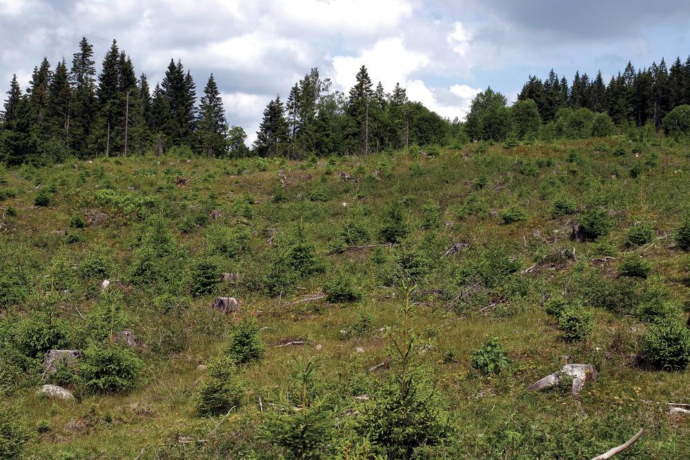 Flatehogst brukes fortsatt på det meste av arealet som skal forynges. Lunner, Oppland. Foto: John Yngvar Larsson, NIBIO