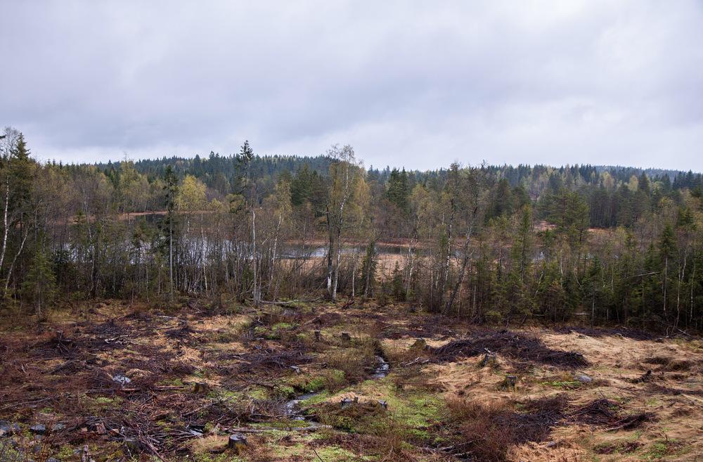 Kantsone mot elv i edellauvskog eller sumpskog skal være 25–30 meter brede. Ringerike, Buskerud. Foto: John Yngvar Larsson, NIBIO