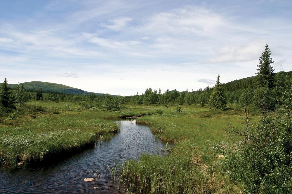 I nasjonalparker er hovedformålet å sikre urørt natur for våre etterkommere. Her fra Langsua nasjonalpark. Foto: John Yngvar Larsson, NIBIO