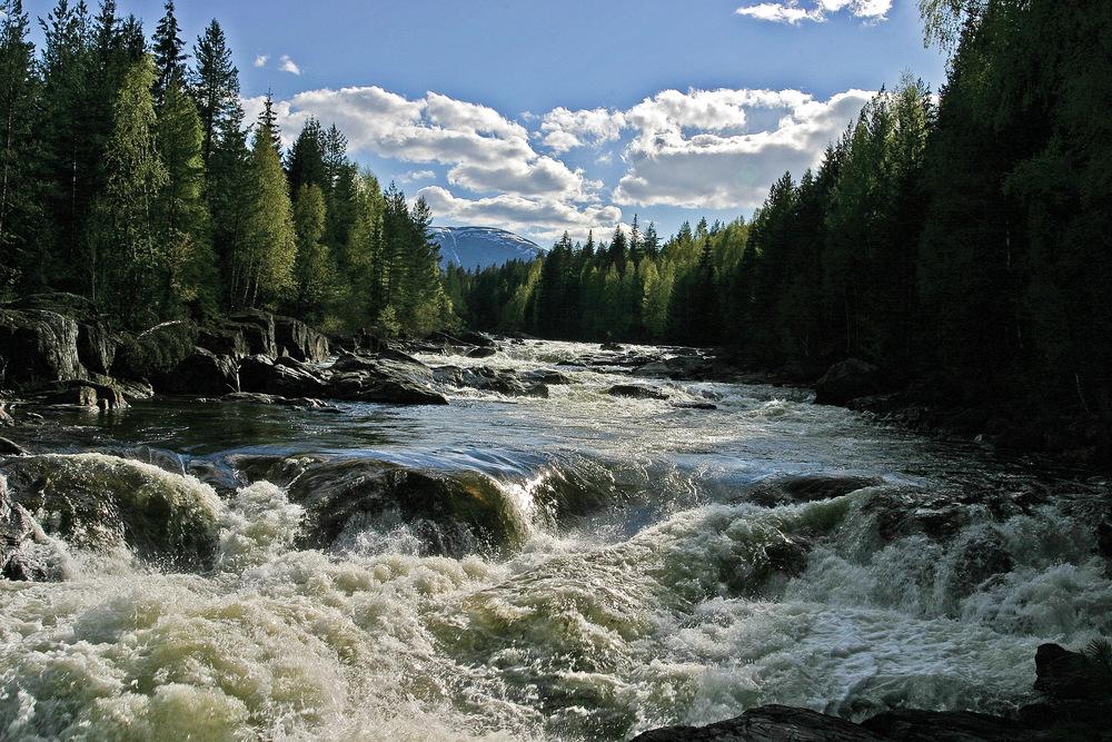 Langs bekker og elver på mer næringsrik grunn består kantsonene av mer produktive blandingsskoger. Sigdal, Buskerud. Foto: John   Yngvar   Larsson, NIBIO