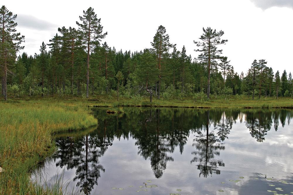 Skogtypene i kantsoner mot vann og myr kan være svært forskjellige. Furumyrskog er vanlig rundt næringsfattige, mindre tjern og torvmyrer. Totjerna, Søndre Land. Foto: John Yngvar Larsson, NIBIO