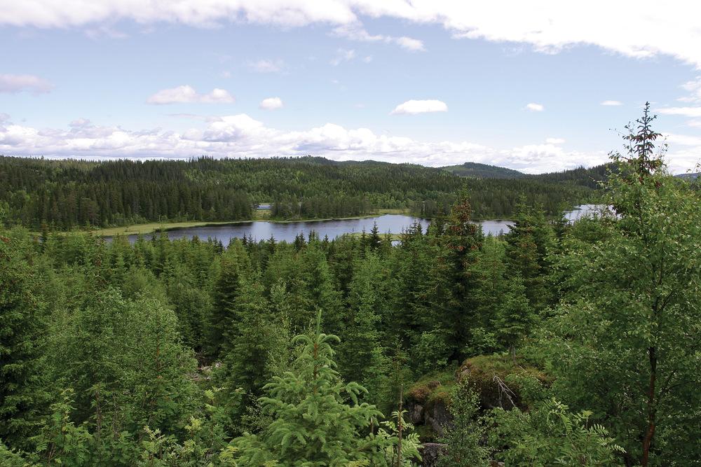 Cirka 60 prosent av skogarealet med naturskogkarakter er bartredominert, og de største arealene ligger i Telemark, Nordland og Nord-Trøndelag. Siljan, Telemark. Foto: John Yngvar Larsson, NIBIO