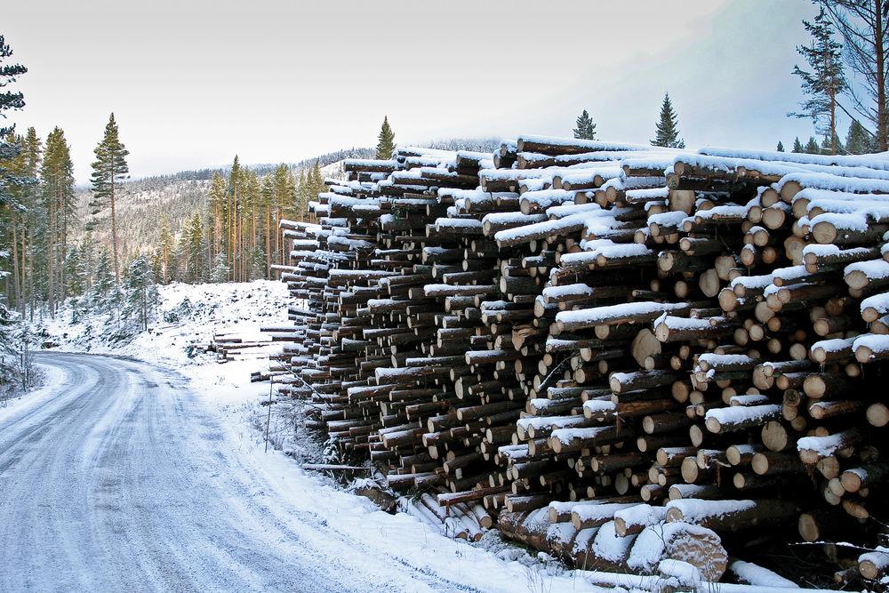 Skogeiere som vil selge tømmer forplikter seg til å følge Norsk PEFC skogstandard. Alle de større kjøperne av tømmer i Norge krever i dag sertifisering. Ringerike, Buskerud. Foto: John Yngvar Larsson, NIBIO