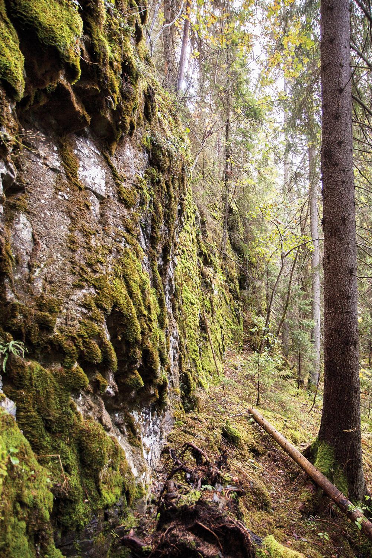 Bergvegger er viktige levesteder for mange sjeldne mose-og lavarter og er et av livsmiljøene som registreres. Foto: John Yngvar Larsson,NIBIO