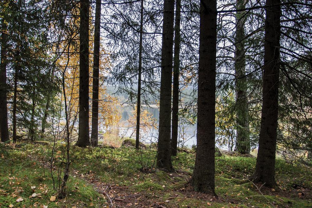 Mer enn 80 prosent av Norges produktive skogareal er i privat eie. Foto: John Yngvar Larsson, NIBIO