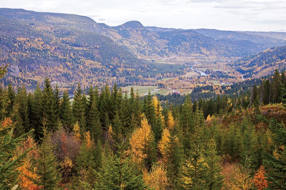 Over 900 000 dekar produktivt skogareal ligger på eiendomsteiger som ikke har gårds-og bruksnummer. Foto: John Yngvar Larsson, NIBIO