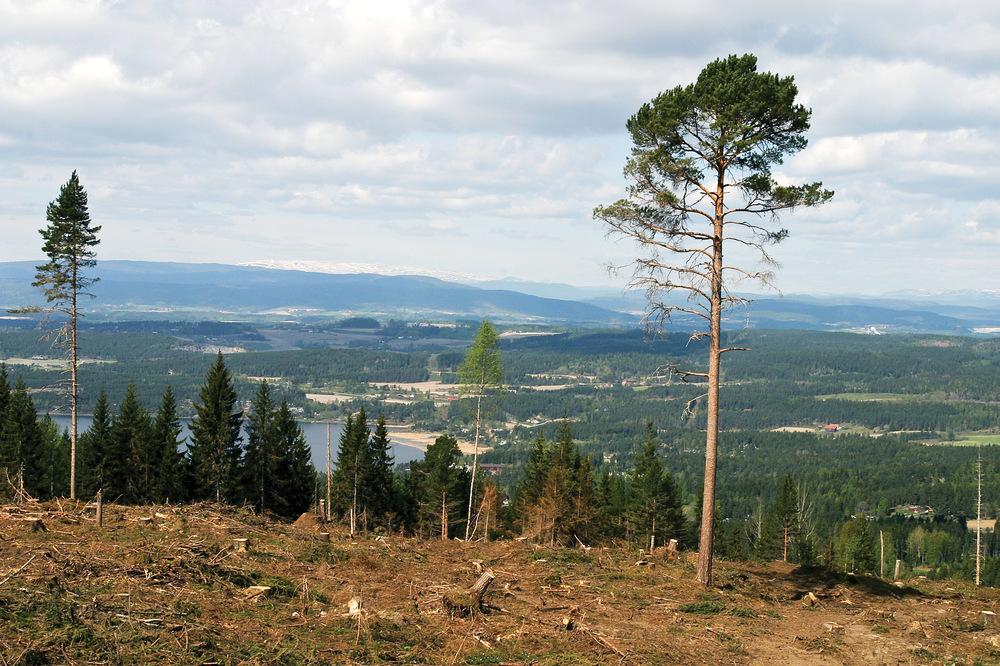 All avvirkning registreres i et nasjonalt system som kobles til skogfondsystemet. Dette gir indikasjon på aktivitetsnivået på en skogeiendom.Nyhogd areal ved Stubdal, Ringerike. Foto: John Yngvar Larsson, NIBIO