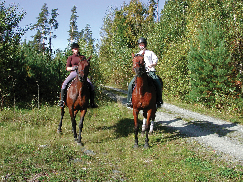 Aktiviteter som riding, terrengsykling, skøyteturer, hundekjøring og bading foregår tildels i skog, men det er ikke mulig å spesifisere hvor mye av denne aktiviteten som faktisk foregår i skog. Foto: Svein Skøien, NIBIO