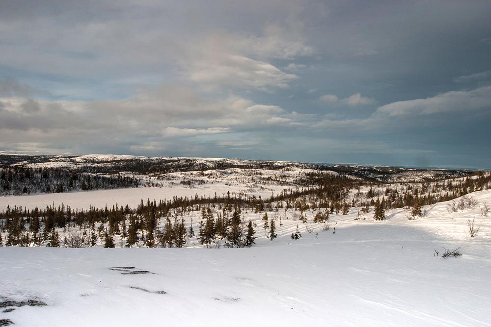 Skogen mot snaufjellet er sårbar og er beskyttet gjennom skogbruksloven. Hedalen, Oppland. Foto: John Yngvar Larsson, NIBIO