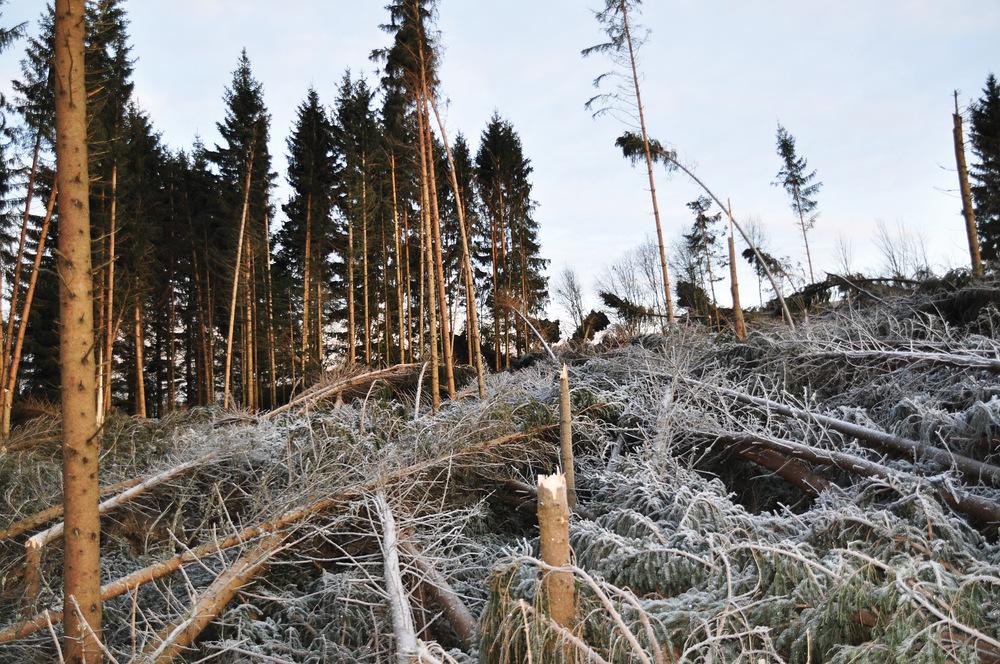 Skogen og skogbrukets infrastruktur er sårbar for ekstremvær. Her fra Brandbukampen etter orkanen Dagmar vinteren 2011–2012 Foto: Anders M. E. Hohle, NIBIO