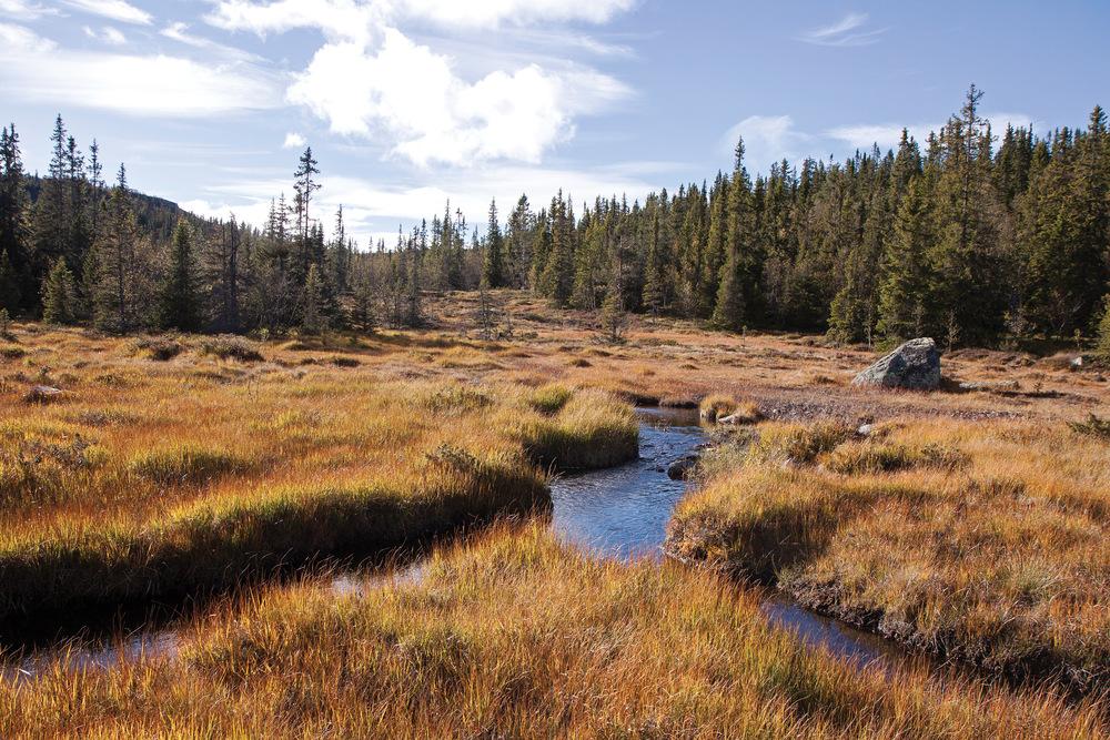 Myr er areal med så høy grunnvannstand at nedbrytingen av materiale går svært langsomt. Foto: John Yngvar Larsson, NIBIO