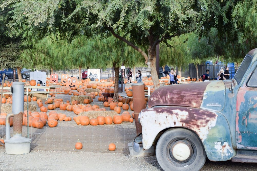 Peltzer Pumpkin Farm | With Love Paper and Wine | Temecula Wine Country
