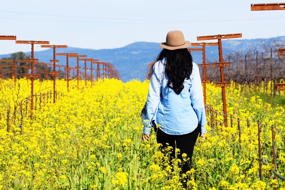 Napa Valley in the Winter | Fields of Mustard Seeds