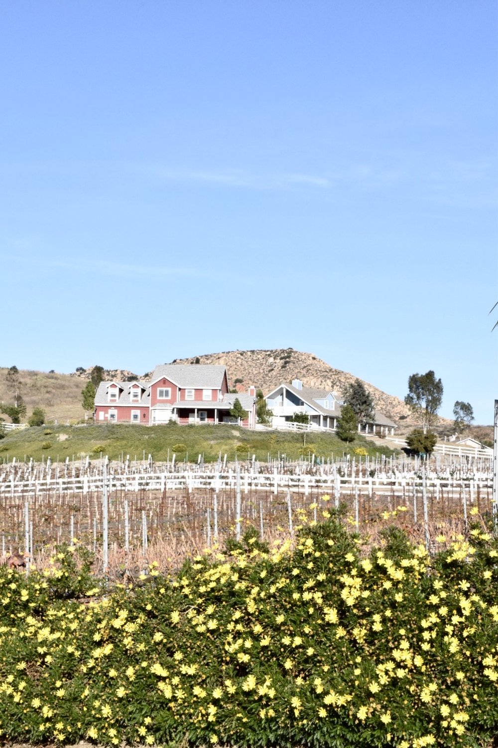Photo by Erika Beach | Temecula Wine Country | Chapin Family Vineyards