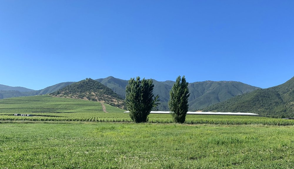Vina VIK Winery and Retreat | Millahue | Chile