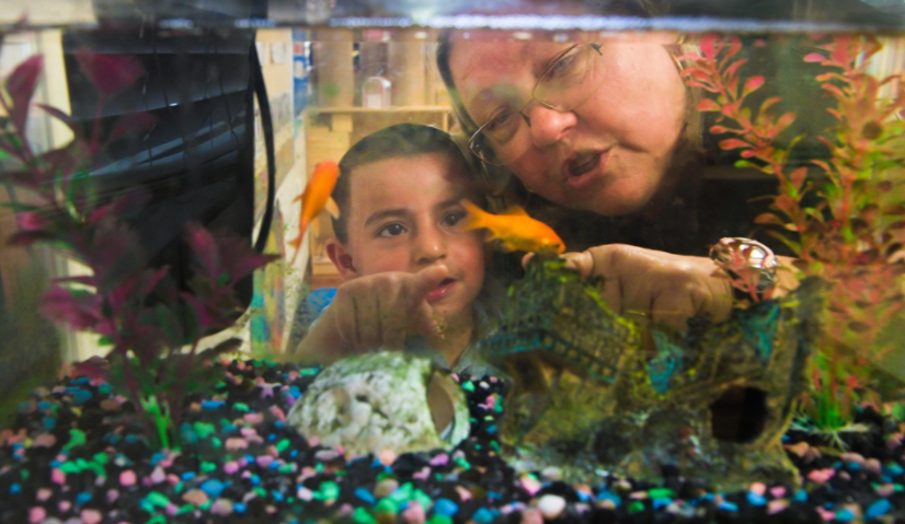 Children First teacher Brenda Haag observes gold fish with 2-year-old Isaac Zapata at Helen Payne Center in Sarasota on Thursday. [Herald-Tribune staff photo/DAN WAGNER].