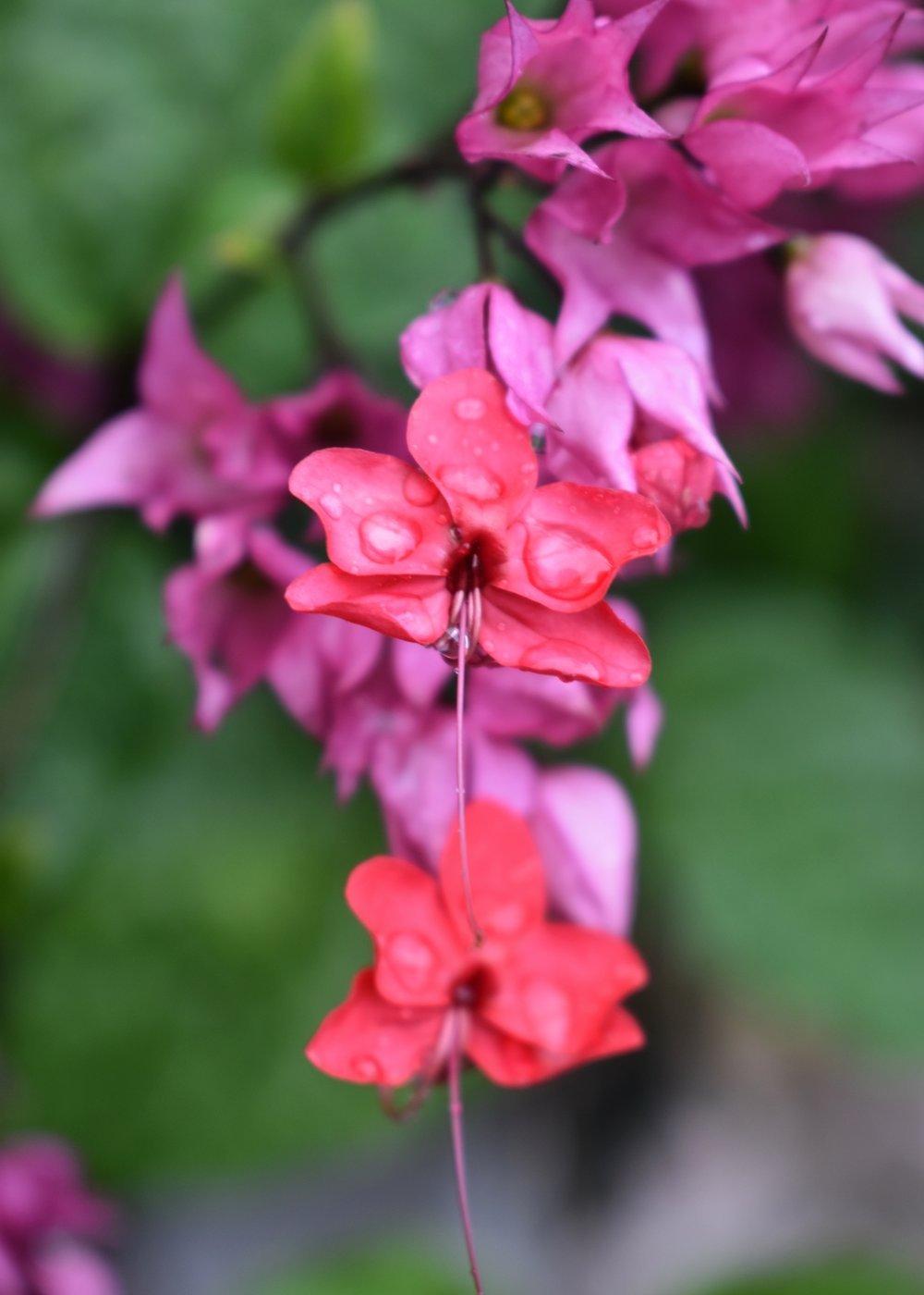 photography-basics-nature-britton-saba-flower.jpg