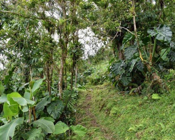 photography-basics-nature-britton-perelman-rainforest.jpg