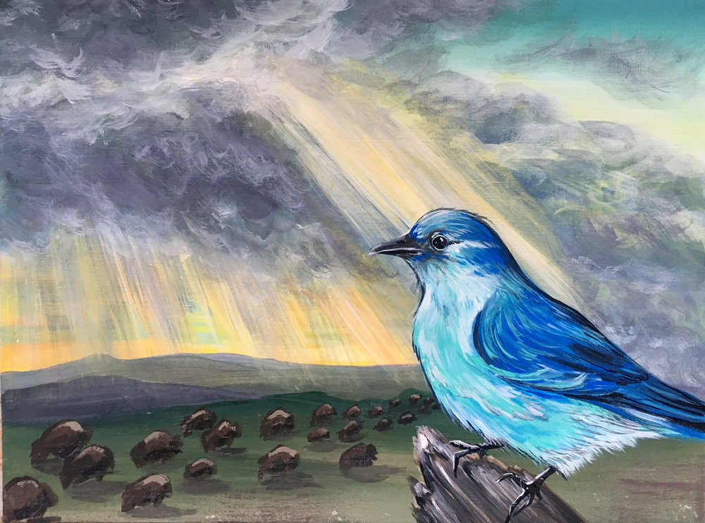 mountain blue bird & sunset rain showers at custer