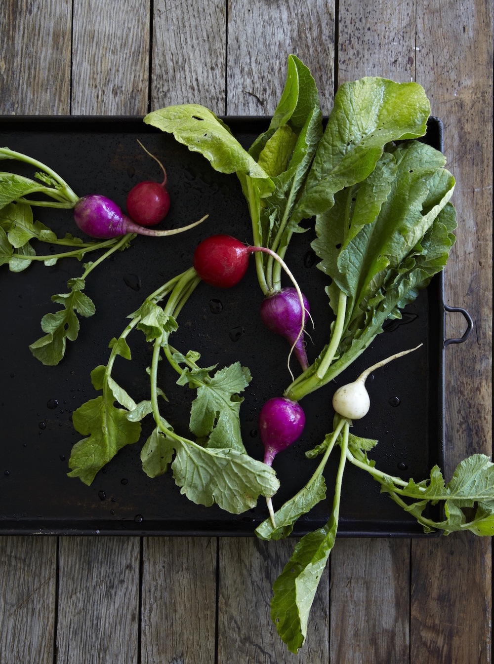 Radishes copy.jpeg