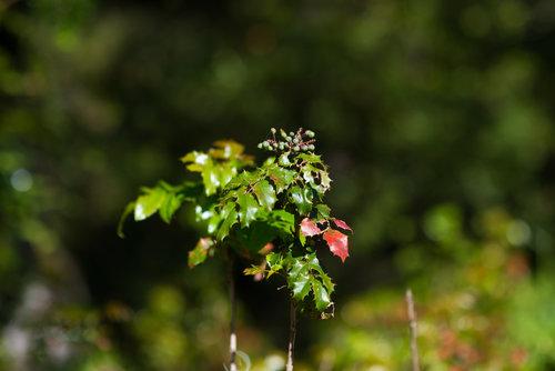 Herbal Medicine Classes — Five Flavors Herbs