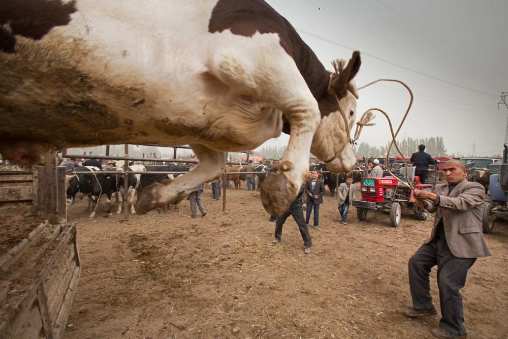 Didier-Vanderperre_Kashgar-cattle-market