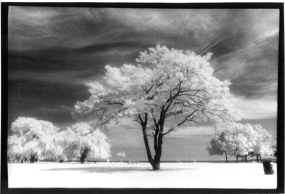 stevens_trees_02