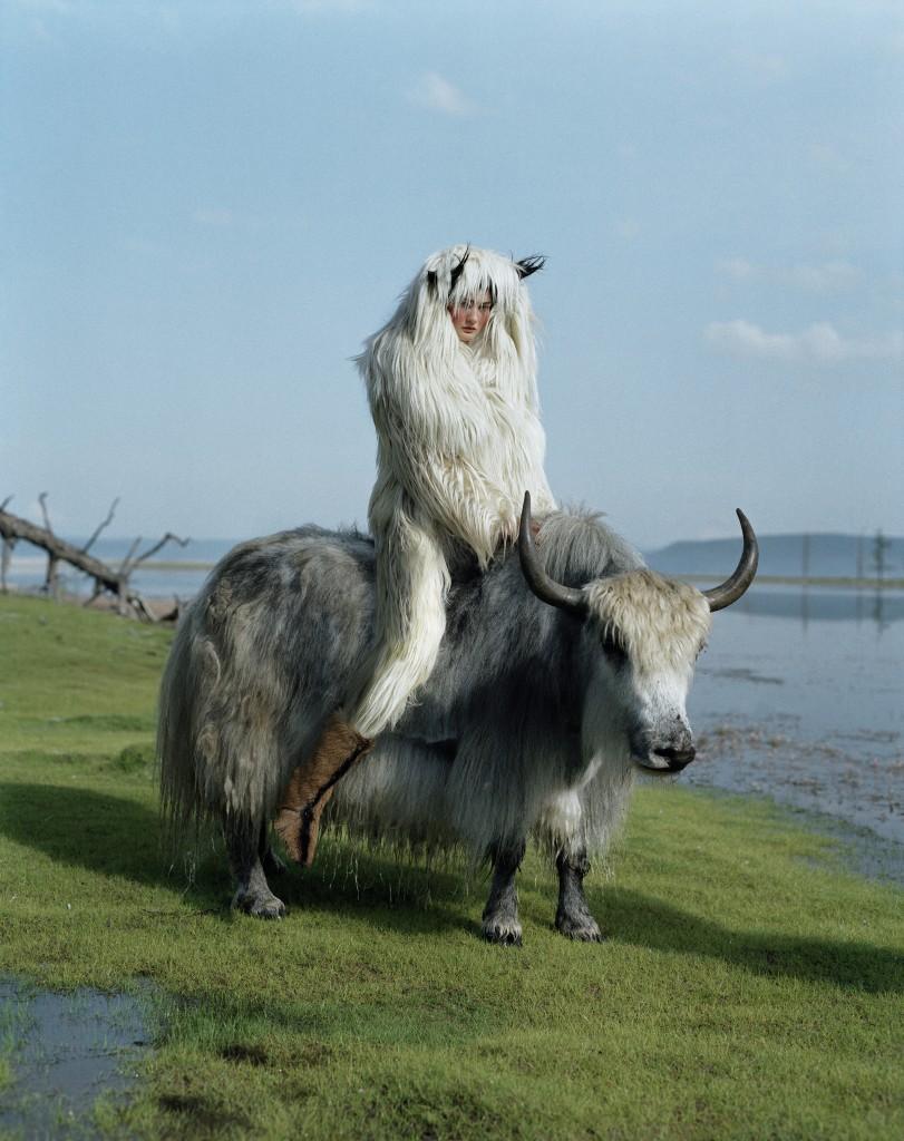 Wild Yak Mongolia