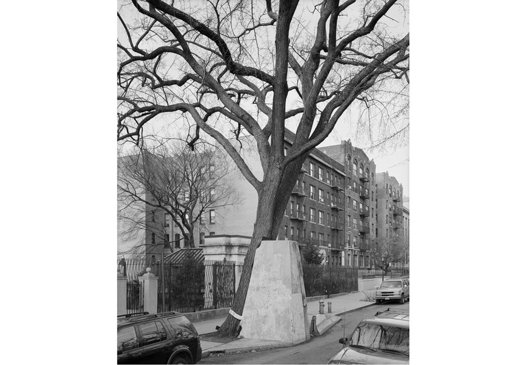 © Mitch Epstein, American Elm, Eastern Parkway, Brooklyn 2012, 2013.