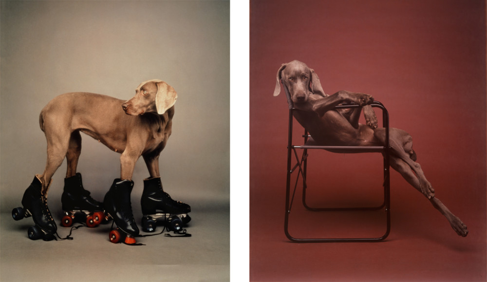 wegam1.  ©William Wegman, (left) Roller Rover; (right) Lolita, 1990. Courtesy of the artist.