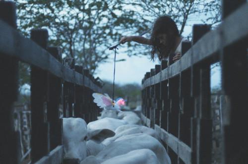 Image Above: ©Gabriel Mascaro, 'Neon Bull' / Courtesy Of  Kino Lorber