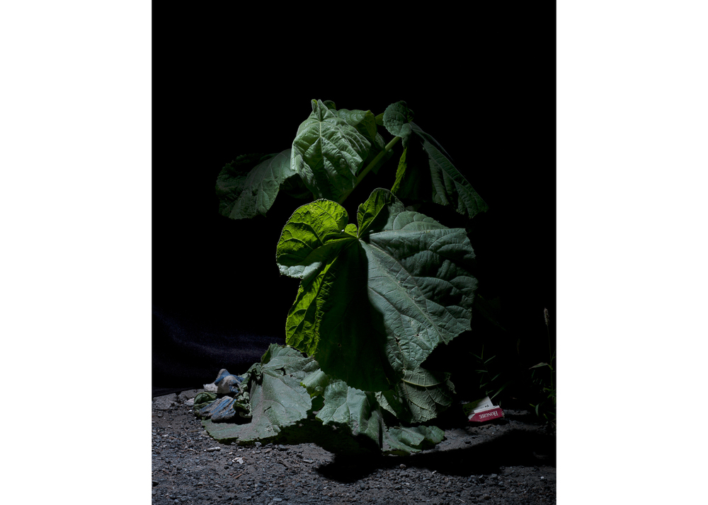 Image above: ©Michael Vahrenwald, Untitled, Cigarettes and Glove, 2014, From series Forest Floor (after Otto Marseus van Schrieck), Archival inkjet prints /Courtesy of the artist