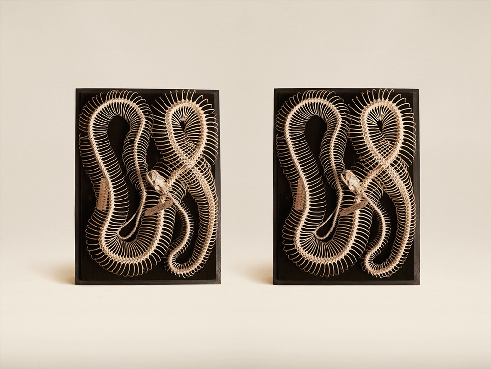 Image above: ©Jim Naughten, Diamond Python, 2015 / Courtesy of Klompching Gallery, New York