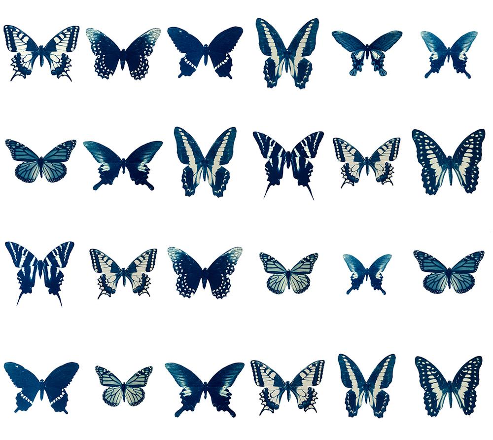 ©Leah Sobsey, The Swarm Grid