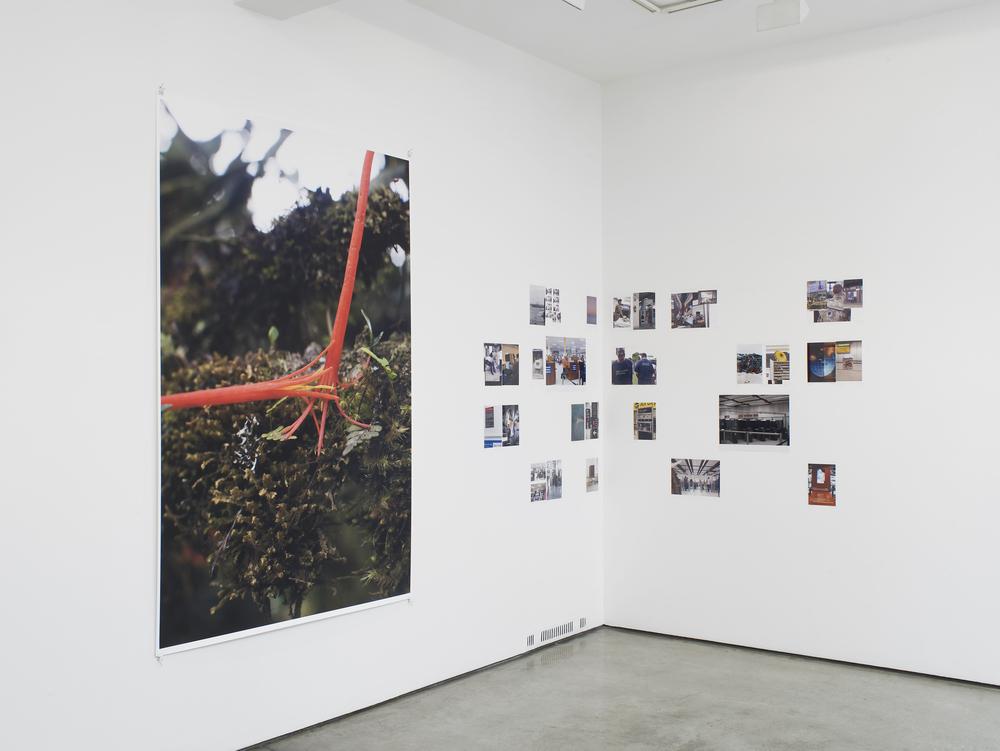 Wolfgang Tillmans, exhibition view, ground floor gallery: Maureen Paley, London 2016  © Wolfgang Tillmans, courtesy Maureen Paley, London