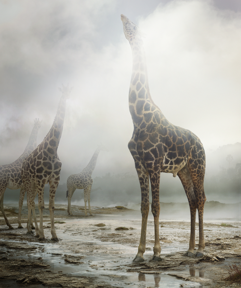 Untitled #172, 2013 © Simen Johan, Courtesy Yossi Milo Gallery, New York
