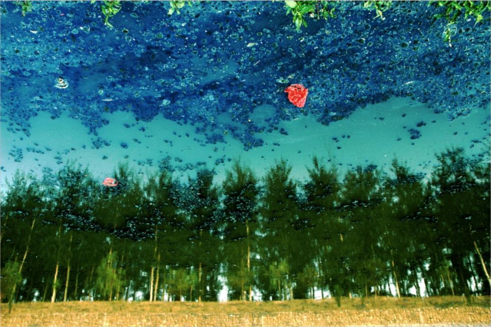 Han Bing, Grove, 2005, Single-Exposure C-Print Photograph, 39 x 59 inches, 100 x 150 cm