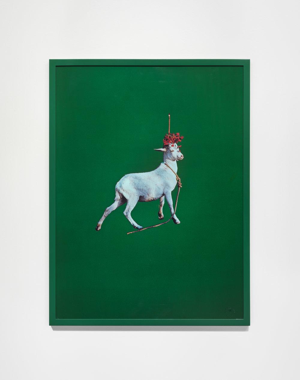 Goat , 1985 © Sarah Charlesworth