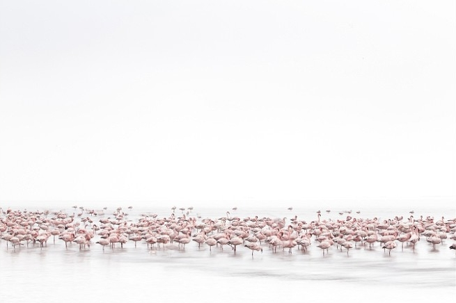 © Alessandra Meniconzi, Switzerland, 1st Place, Open, Wildlife, 2017 Sony World Photography Awards
