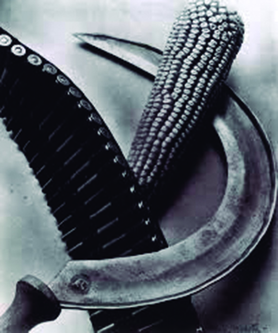 Bandolier, corn and sickle, Photograph by: Tina Modotti