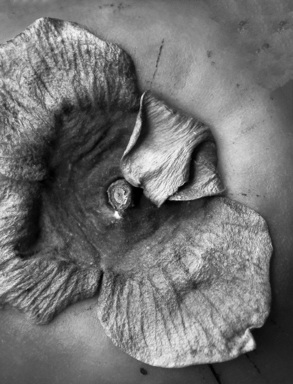 Persimmon ©Danielle Zar