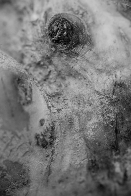 Parsnip ©Danielle Zar