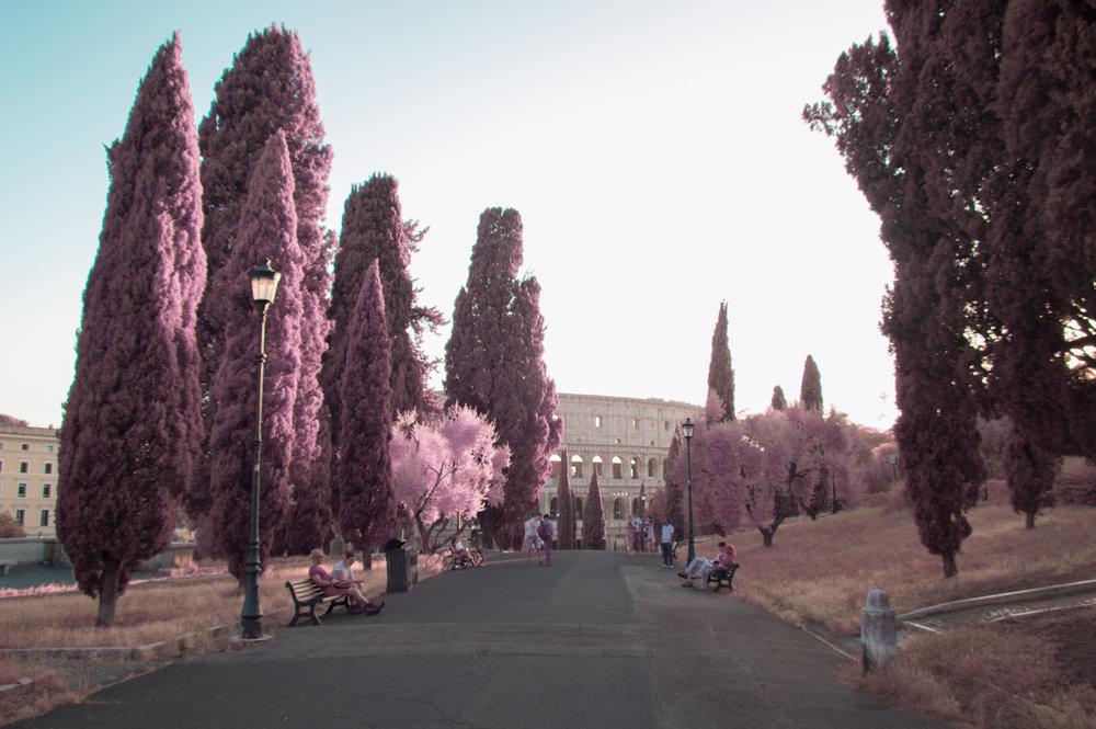 'Roma Rosa 11'  © Milán Rácmolnár