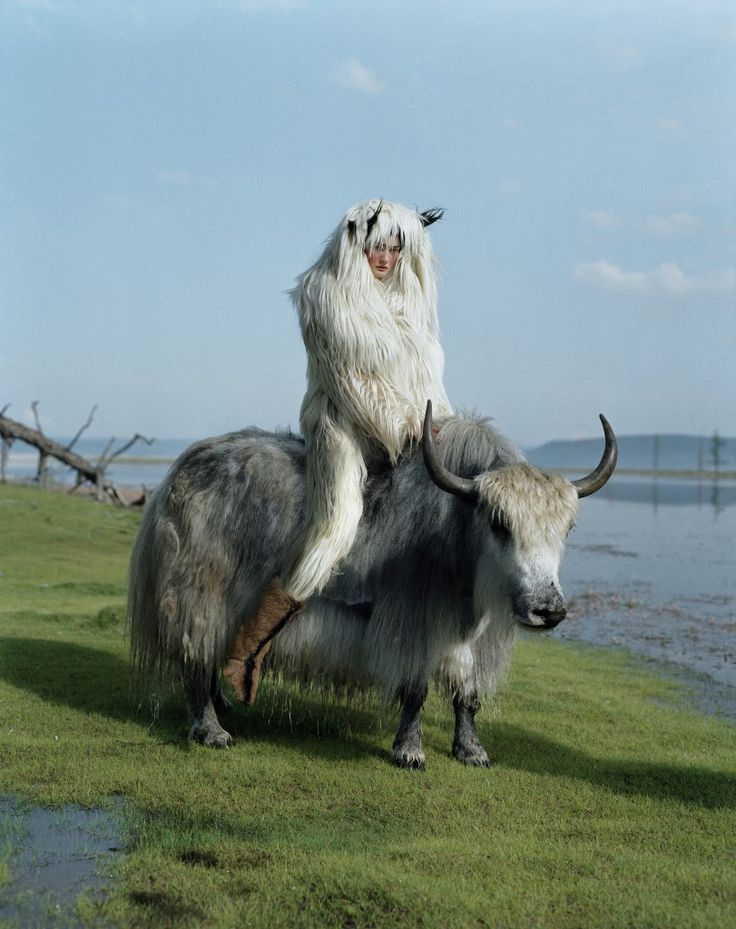 'Kirsi Pyrhonen on wild yak'  2011 © Tim Walker