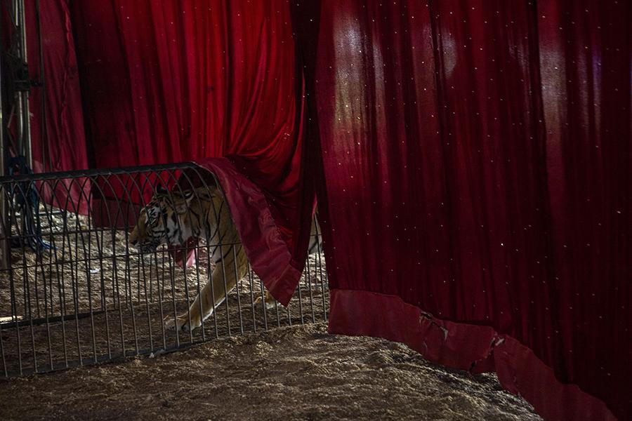 'Circus 2' © Adriana Zehbrauskas