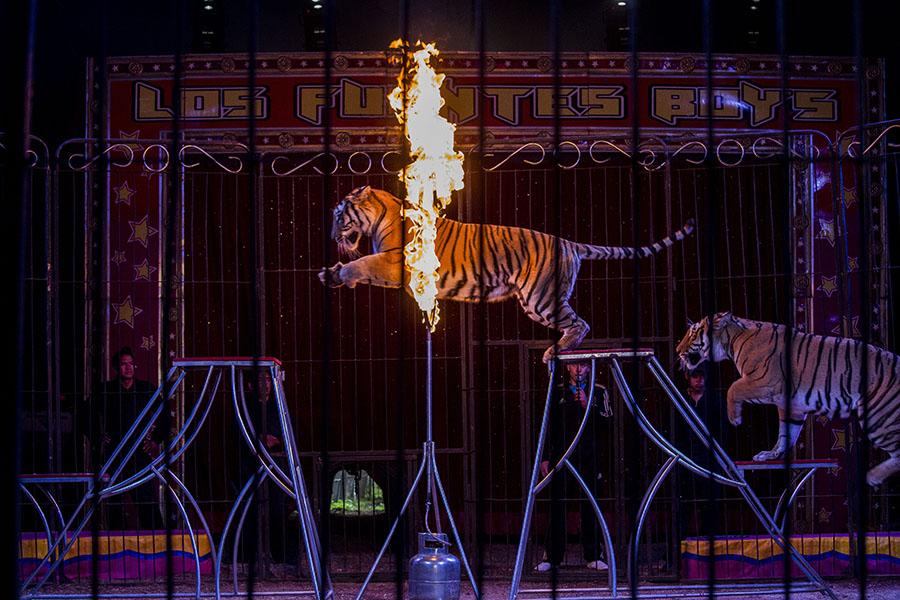 'Circus 3' © Adriana Zehbrauskas