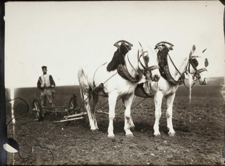 Étude de cheval, c. 1898-1900. Chevaux de trait et paysan aux labours.