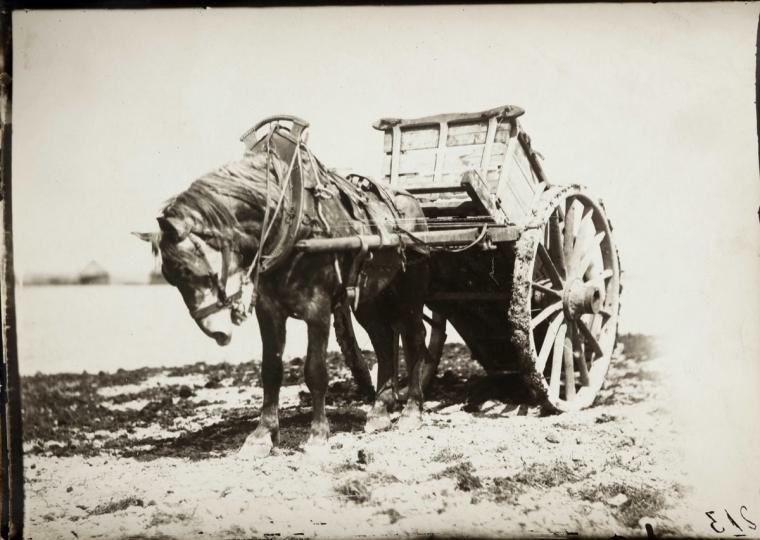 Étude de cheval, c. 1898-1900. Cheval et sa charrette.