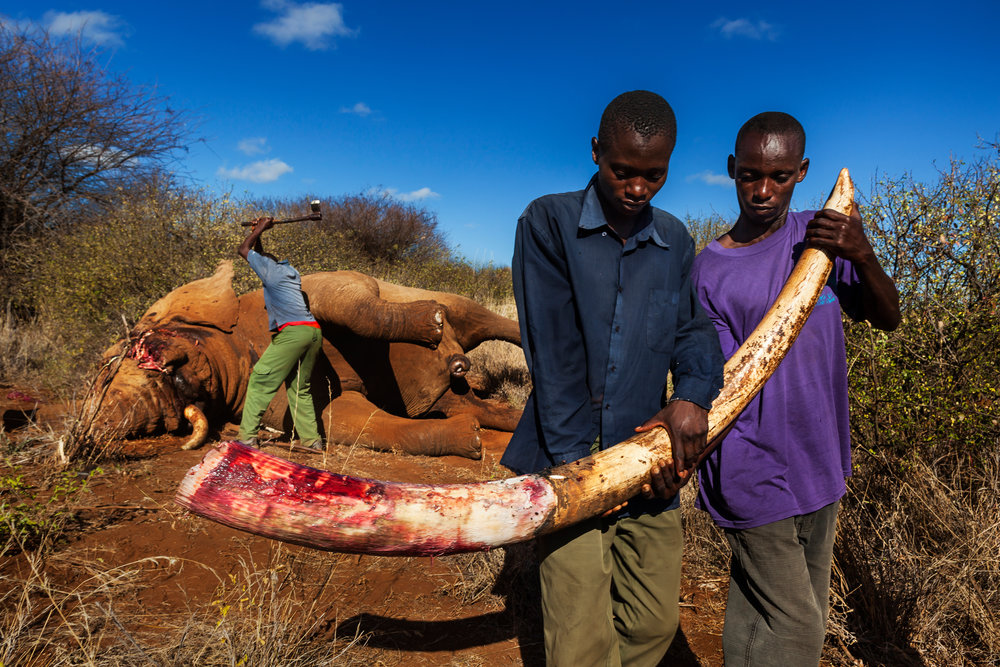 God Ivory 009 © Brent Stirton, Verbatim Agency